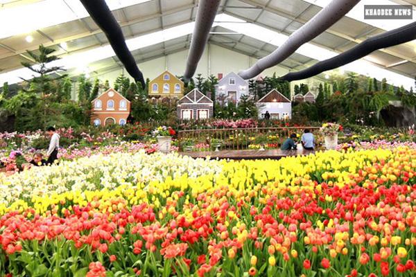 ญี่ปุ่นตัดดอกกุหลาบและดอกทิวลิปทิ้งทั้ง หวั่นโควิด-19 ระบาดซ้ำ